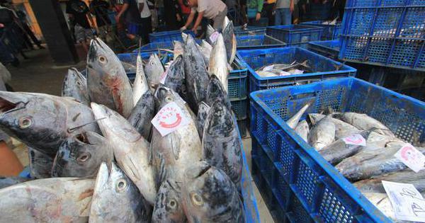 Ekspor ke Tiongkok Bisa Naik Meski Ada Temuan Covid-19 di Ikan Asal RI